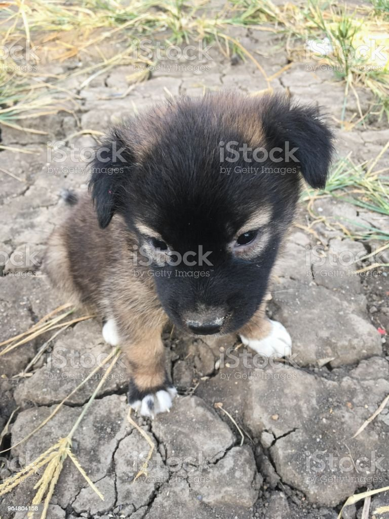 cute baby dog on the ground royalty-free stock photo