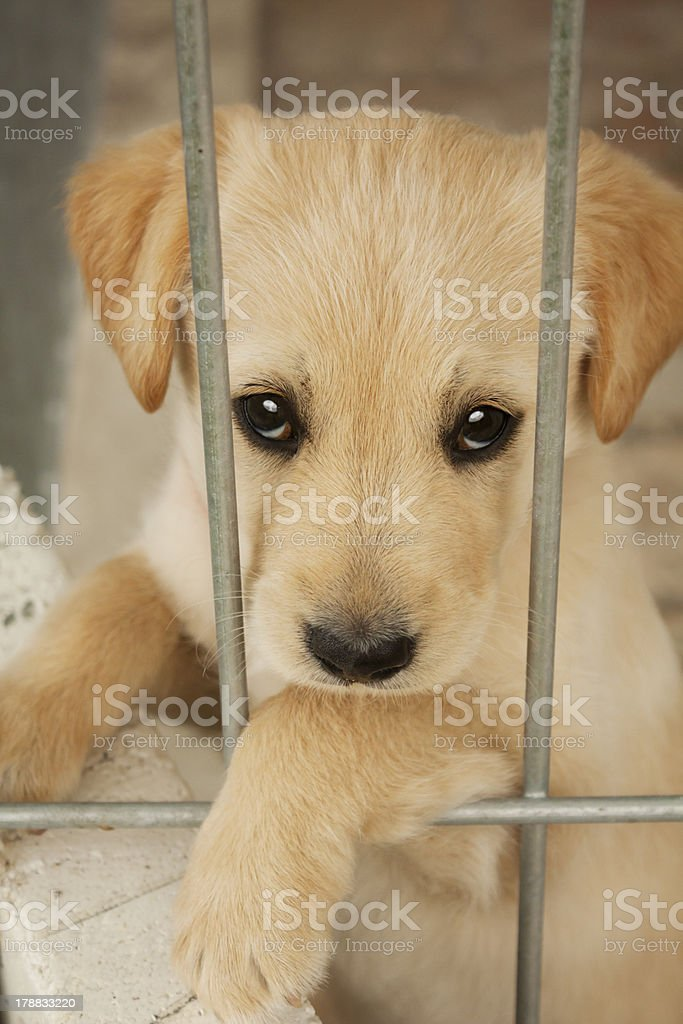 Cute baby dog,puppy close up stock photo