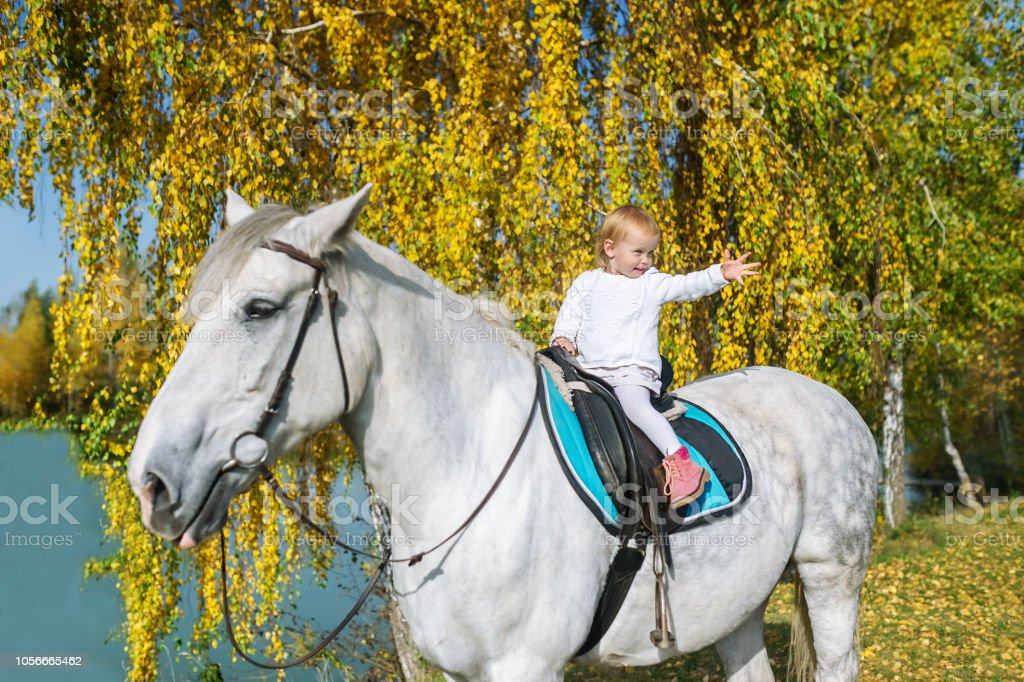 A Cute Baby Girl Is Sitting On A Beautiful White Horse In Autumn Nature Stock Photo Download Image Now Istock
