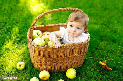 istock Cute baby girl sitting in basket full with ripe apples on a farm in early autumn. Little baby girl playing in apple tree orchard. Kids pick fruit in a basket. Healthy nutrition 1027669788