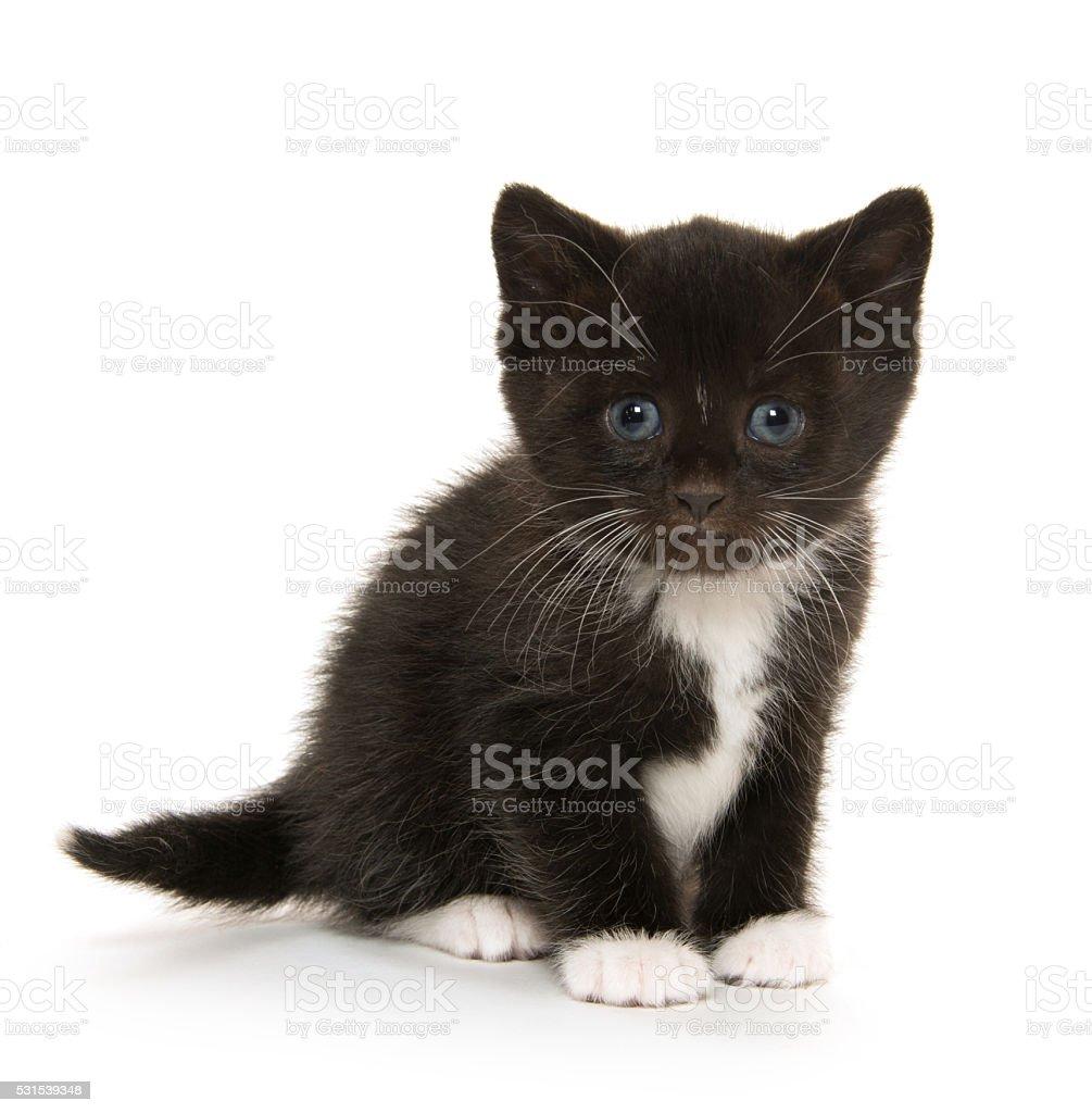 Cute baby kitten on white stock photo