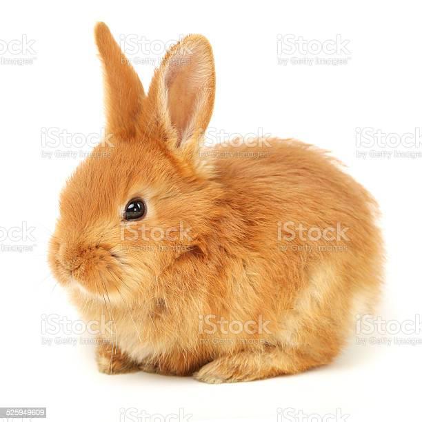 Cute baby rabbit picture id525949609?b=1&k=6&m=525949609&s=612x612&h=eokfuya92 w19kv qysdp6zc1ik2cwas8olxifowywc=