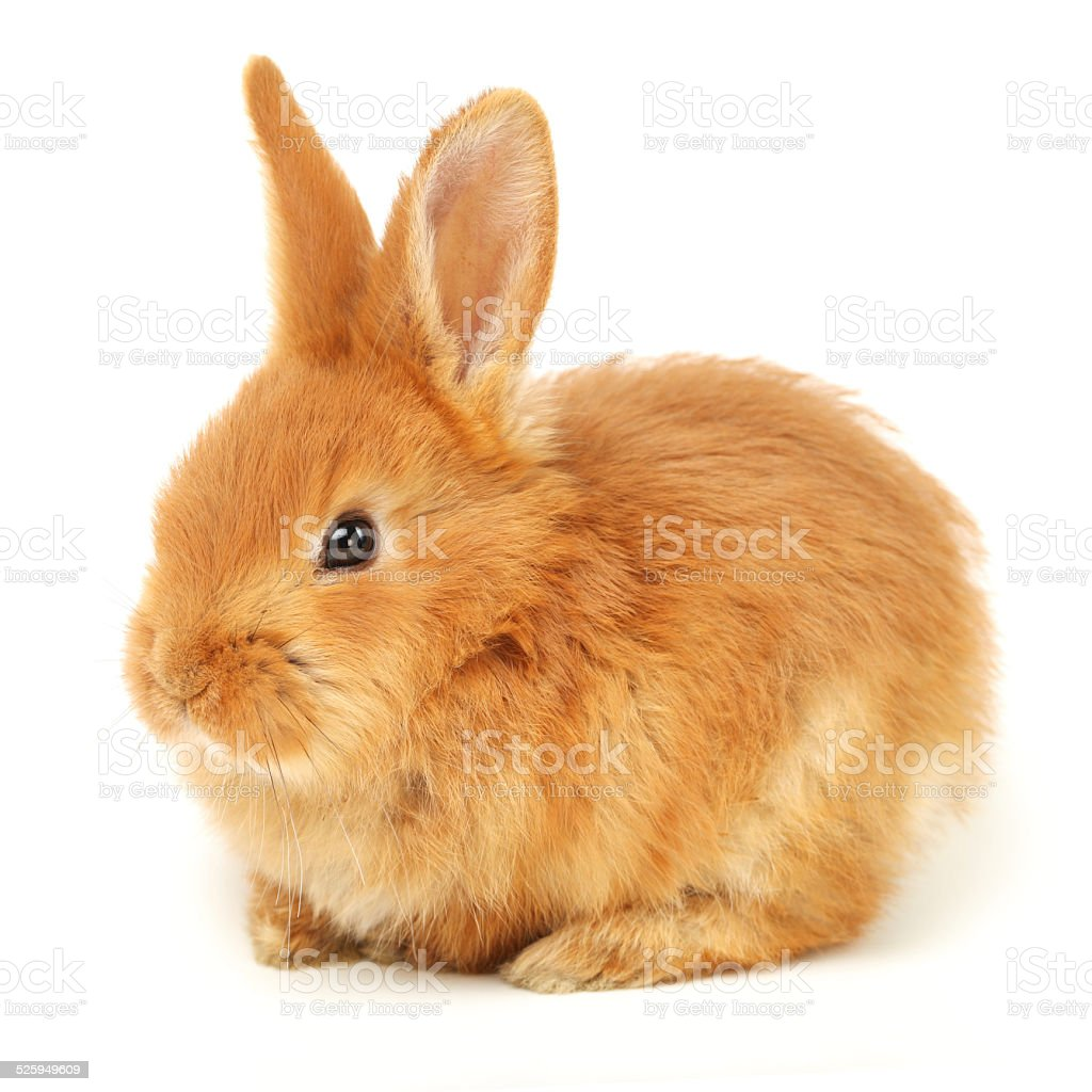 Cute Baby Rabbit stock photo