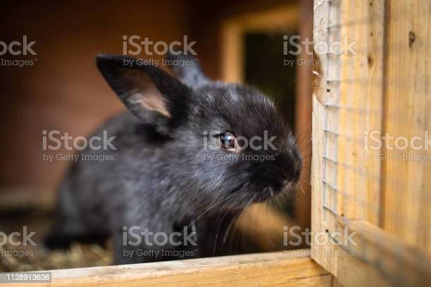 Cute baby rabbits in a farm picture id1128913636?b=1&k=6&m=1128913636&s=612x612&h=nx2jxzdujeeqvnbebpwsunf yostmxuutokgiox2x4g=
