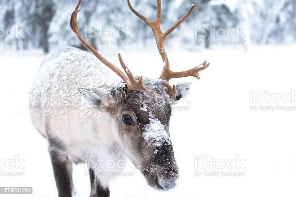 Cute baby reindeer picture id579231234?b=1&k=6&m=579231234&s=612x612&h=zegsu0pru9gkm636d craxtxdm okhilox2zsn8tzh8=
