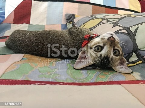 Cute baby Tabby cat relaxing on bed