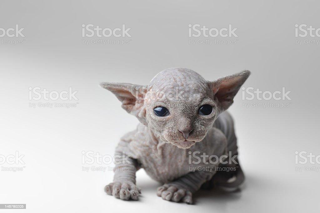 Baby katzen süße 3 süße