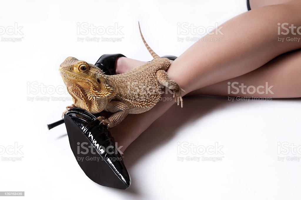 Cute Bearded Dragon Lizard Pet On Sexy Legs Stock Photo - Download