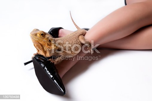 139880782istockphoto Cute Bearded Dragon Lizard Pet on Sexy Legs 120753435