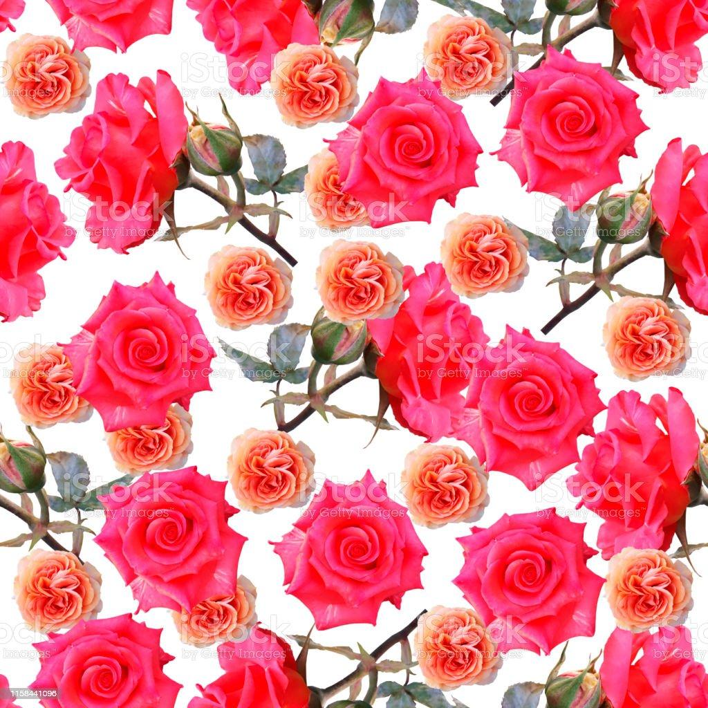 Bonitas Y Bonitas Rosas Coloridas Fondo De La Foto Floral