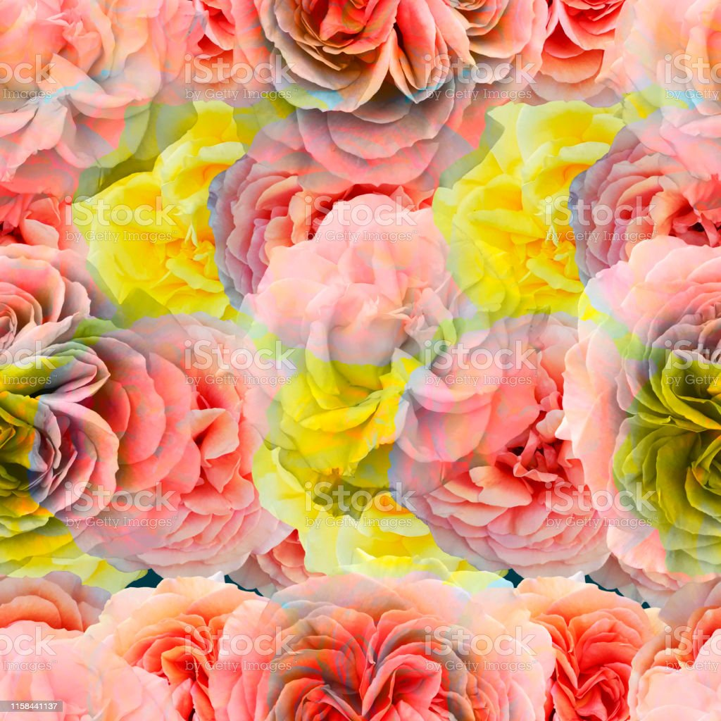 Cute Beautiful Salmon Pink And Yellow Roses Seamless Floral Photo
