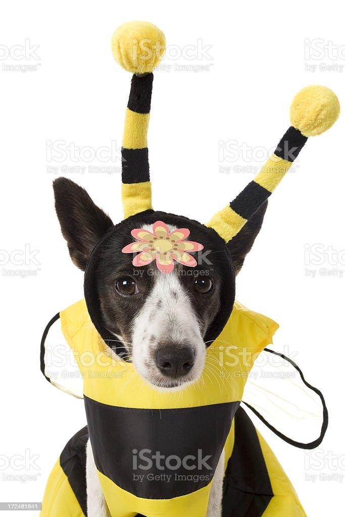 Cute Bee Dog stock photo