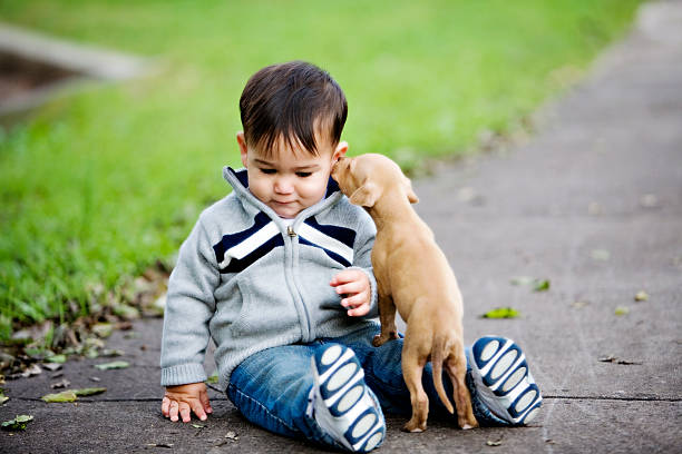 Cute beige puppy licks the ear of a little boy on the ground stock photo