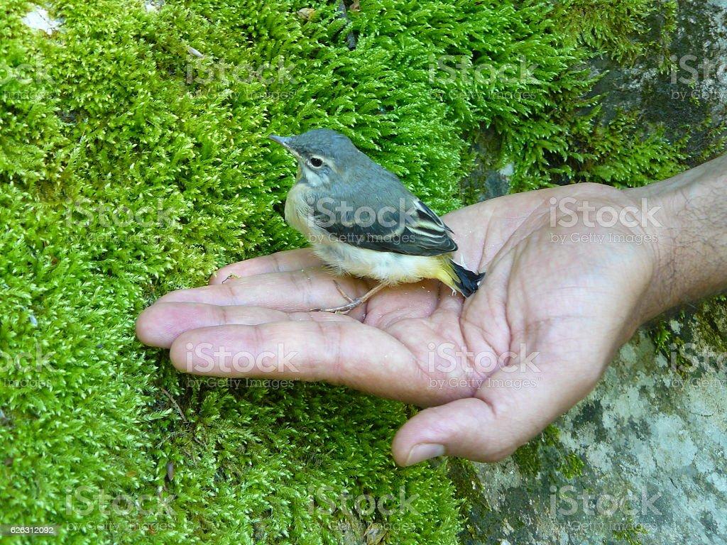 Cute bird stock photo