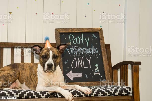 Cute birthday dog picture id857822262?b=1&k=6&m=857822262&s=612x612&h=otpr4remhf1rhfru4h oppy0zxxne1h14q6mkdldgpo=