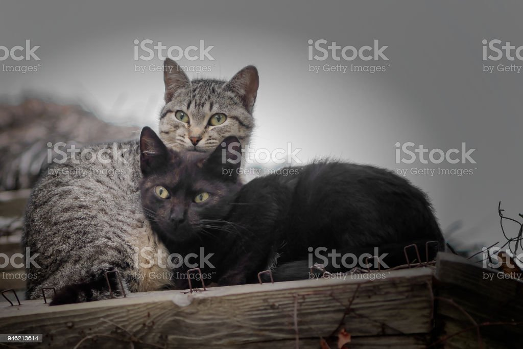 Cute black and tabby kittens on roof. stock photo