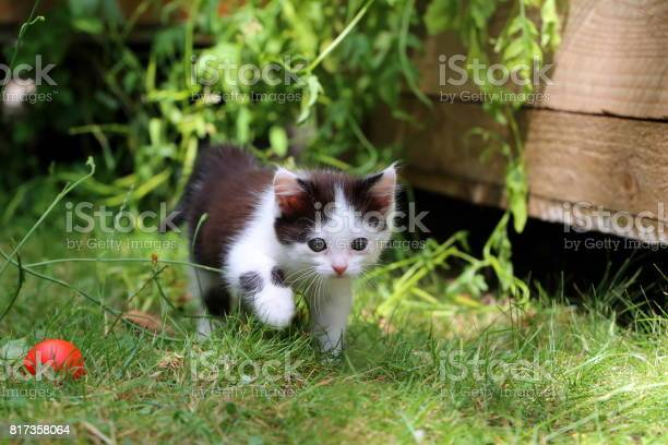 Cute black and white garden kitten picture id817358064?b=1&k=6&m=817358064&s=612x612&h=67kldul2dwr7 y9ftzixshbfk9l mv cpn19g 4gbso=