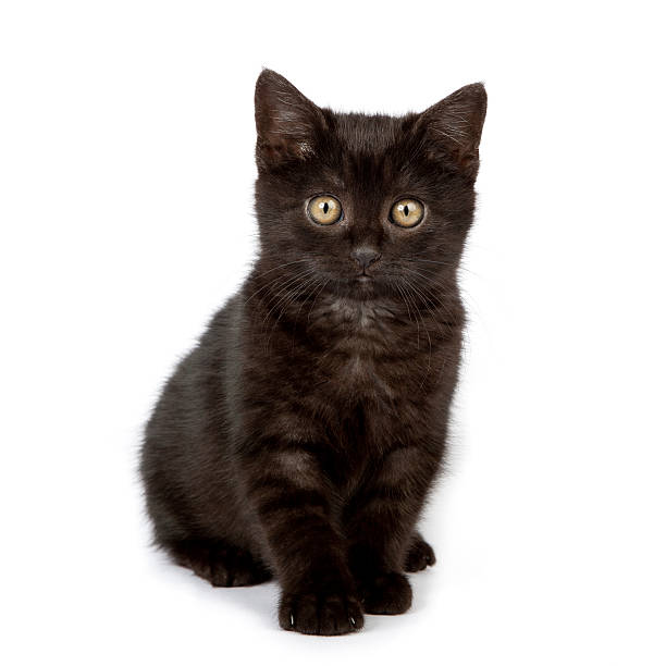 Cute black baby cat picture id184913695?b=1&k=6&m=184913695&s=612x612&w=0&h=cm3hppphbgseicgc1wuxmsfc4h3wosupaec w0gusce=