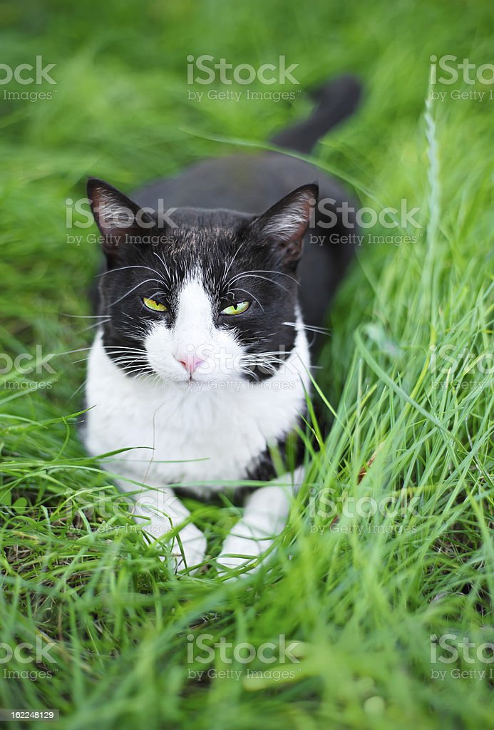 Cute Black Cat Lying On Green Grass Lawn Stock Photo More Pictures