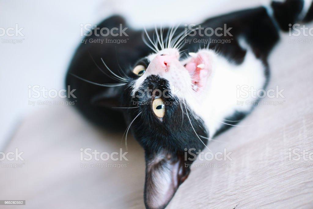 Cute Black Cat royalty-free stock photo