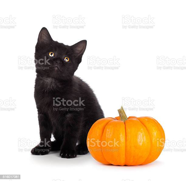 Cute black kitten and mini pumpkin isolated on white picture id516017081?b=1&k=6&m=516017081&s=612x612&h=6nlv5sk5s0qif754gtpdekvs68d4gl1yg9hew8nqvgk=