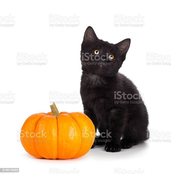 Cute black kitten and mini pumpkin isolated on white picture id516018055?b=1&k=6&m=516018055&s=612x612&h=ml7hladjyolvdlxy5gvcpg8n nbiihcu5c3bsv x9by=