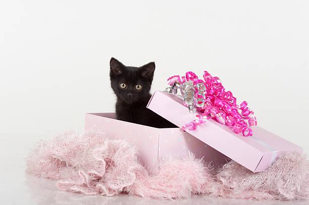 Cute black kitten in pink gift box present picture id146793282?b=1&k=6&m=146793282&s=612x612&w=0&h=lxbuivrl7ga7yl3iav gtdoqk453ywipwamyfqt5paq=