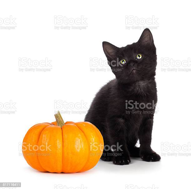 Cute black kitten next to mini pumpkin on white picture id517116411?b=1&k=6&m=517116411&s=612x612&h=tgjoqfbotaelkwun sqjwmbc vilqogbnynoa4n4a78=