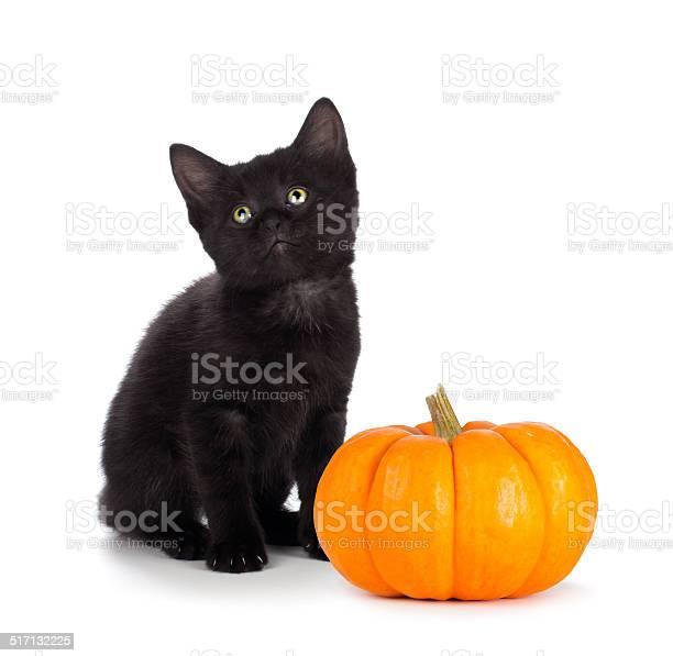 Cute black kitten next to mini pumpkin on white picture id517132225?b=1&k=6&m=517132225&s=612x612&h=xfn7kdd0mmeq35gajwagohegr6ufqc5jlz9xe8lti a=