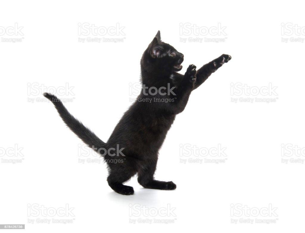 Cute black kitten on white stock photo