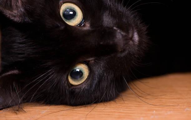 Cute black kitten picture id1160585871?b=1&k=6&m=1160585871&s=612x612&w=0&h=6snt7gncgju2nmfhcvspsslihz1gdrpynd8rdwc8nqk=