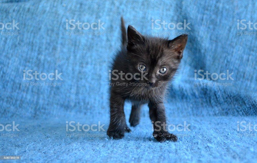 Cute black kitten stock photo