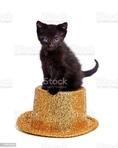 Cute black kitten sitting on party hat picture id179335400?b=1&k=6&m=179335400&s=612x612&h=aakrf5o6zly6i gl0415xxdmzgwgzunsuszezdul7io=