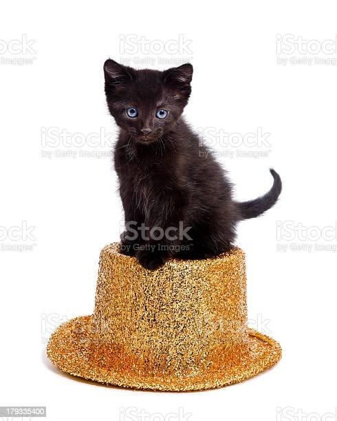 Cute black kitten sitting on party hat picture id179335400?b=1&k=6&m=179335400&s=612x612&h=aakrf5o6zly6i gl0415xxdmzgwgzunsuszezdul7io=