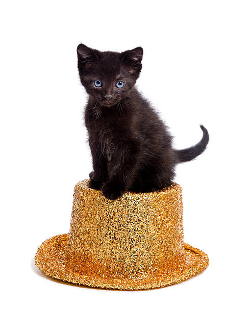Cute black kitten sitting on party hat picture id179335400?b=1&k=6&m=179335400&s=612x612&w=0&h=ilkuvmpxeyk8sgtf4pgc1dnucfcoe xj1ak8yjjr3e0=