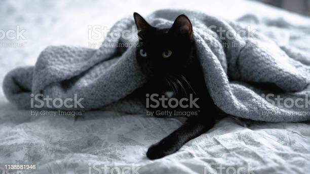 Cute black kitty lying on bed wrapped in blanket picture id1138581946?b=1&k=6&m=1138581946&s=612x612&h=wrcv497mgm3lh0f38jftsuejxjci632hpz3q f5yqgq=