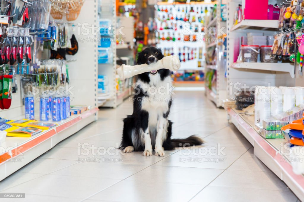 Mignon Border Collie en animalerie avec os de gros chien - Photo