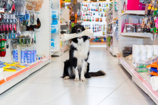 Mignon Border Collie en animalerie avec os de gros chien - Photo
