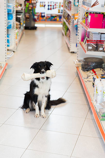 niedlich border-collie mit großen hund knochen in haustier shop - hundeleinen halter stock-fotos und bilder
