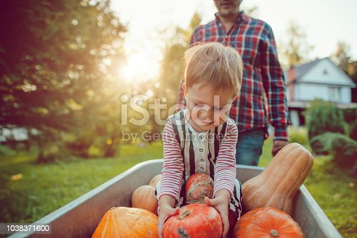 istock Cute boy and his father with pumpkins in autumn 1038371600