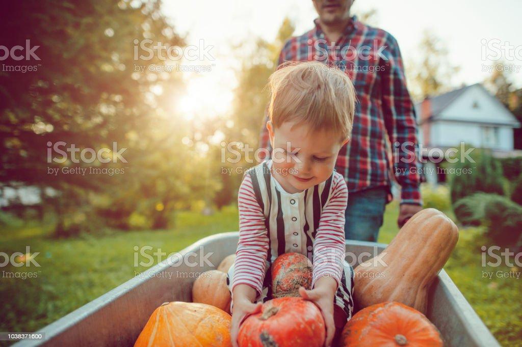 Süße junge und sein Vater mit Kürbissen im Herbst – Foto