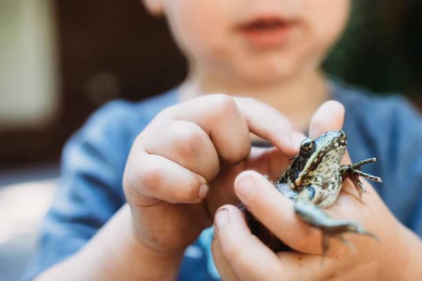 Cute boy holding frog picture id815364882?b=1&k=6&m=815364882&s=612x612&w=0&h=xpeiz34mai8qdkbxap186rl0jswb1yp1zqgbqtzlgno=