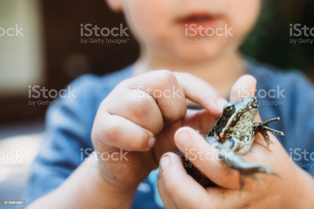 Cute Boy Holding Frog stock photo