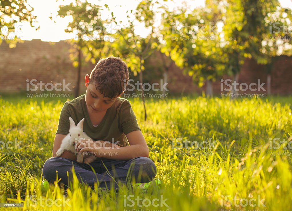 Cute boy holding rabbit stock photo