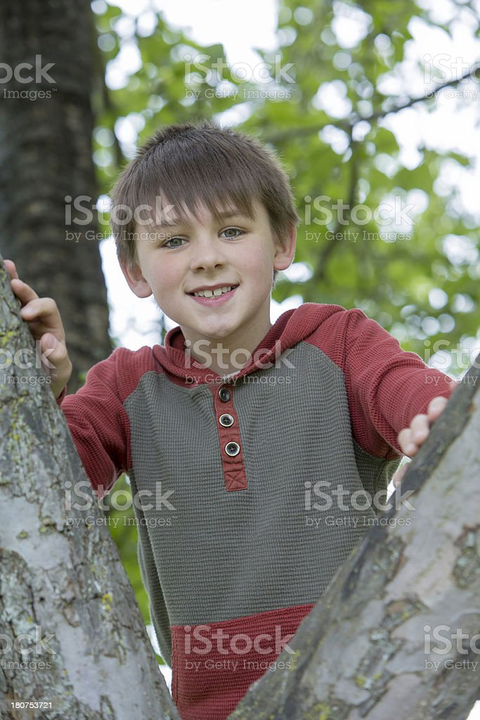 Cute Boy in a Tree Vertical royalty-free stock photo
