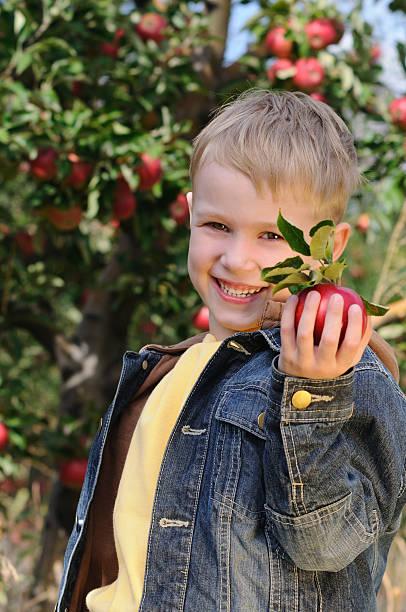 Hübsches boy im Apfelgarten – Foto
