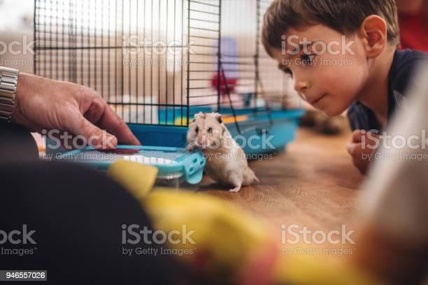 Cute boy looking at the hamster pet picture id946557026?b=1&k=6&m=946557026&s=612x612&h=p8onngwqaxugfvvged8gpsv412u8n1  3g8 tgzu6r4=