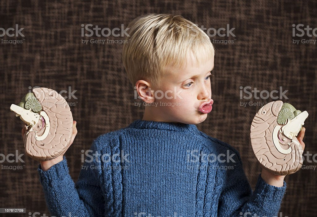 Cute boy looks at two halves of model brain, perplexed stock photo