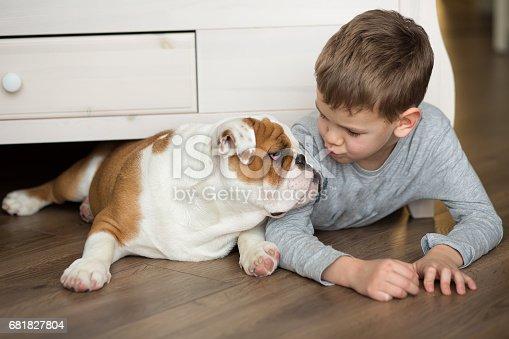 Cute boy plays on the floor on a carpet with puppies of English bulldog.