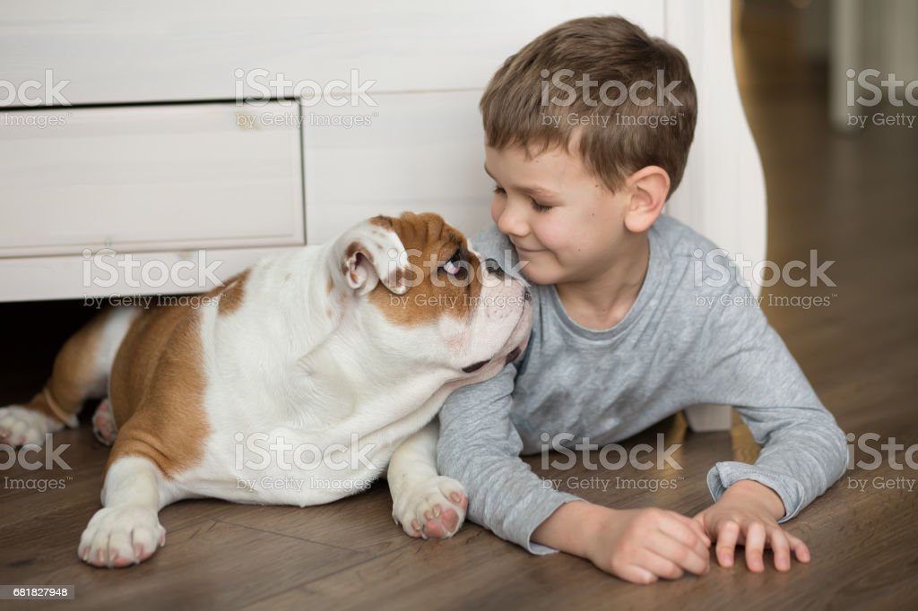 Cute boy plays on the floor on a carpet with puppies of English bulldog stock photo